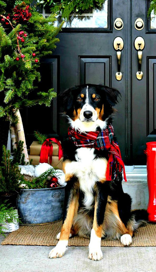 Dogs-Christmas-gifts