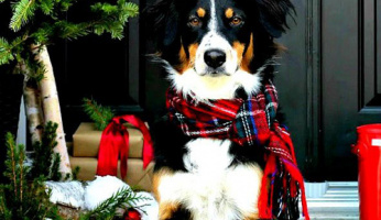 Holiday Gift Guide: Gifts for Pets & Pet Lovers